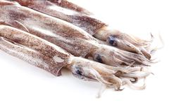 Fresh calamari on a white background - stock photo