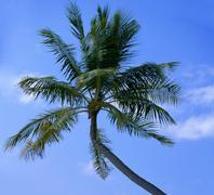 Dream scene. Beautiful palm tree over white sand beach - stock photo