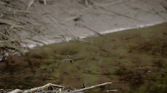 A dragonfly about to land on the muddy sticks Stock Footage