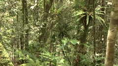 Silky Sifaka moving in trees in the rainforest of Madagascar 1 Stock Footage
