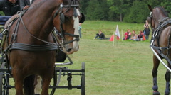 The brown horse with the carriage starts to run - stock footage