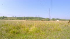 High-voltage wires of the mast. Cows graze in the meadow under the wires. - stock footage