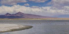 Tara Salt Flat, Los Flamencos National Reserve, San Pedro de Atacama, El Loa - stock photo