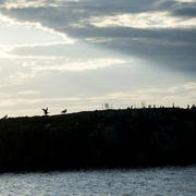 Silhouette  of a Flock of birds at Lake Of The Woods, Ontario, Canada Stock Photos