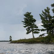 Evergreen Trees at the lakeside, Lake Of The Woods, Ontario, Canada - stock photo