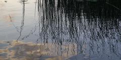 Reflection of Reeds in a lake, Lake of the Woods, Ontario, Canada Stock Photos
