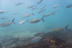 Underwater view of a school of fish - stock photo