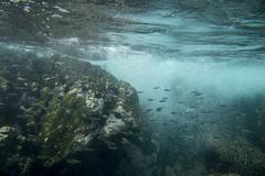 Underwater view of a school of fish Stock Photos