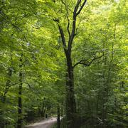 Stock Photo of Tree lined pathway at Manoir-Papineau National Historic Site