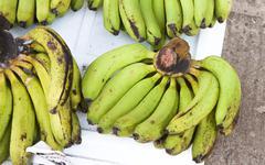 Green bananas Musa acuminata Stock Photos