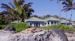 Hawaii Water Crab Stock Footage
