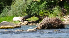 A nice shot of a scenic river in Durango, Colorado. Filmed in 4K UHD. - stock footage