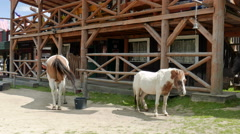 Old west. Horses in the wild west style town Stock Footage