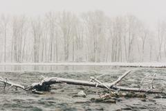 Winter Storm at the Bow River - stock photo