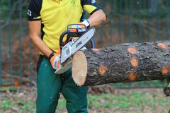 arborist cutting a tree with a chainsaw - stock photo