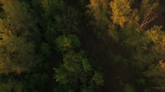 Aerial shot of forest in autumn, Russia Stock Footage