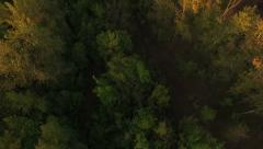 Aerial view of autumn forest, Russia Stock Footage
