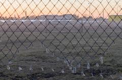 Abandoned soccer field through old goal net - stock photo