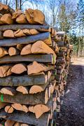 recut tree trunks - stock photo