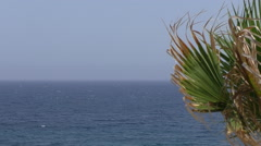 Palm leaf and sea background Stock Footage