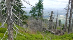 Dead trees. Co2 and So2 emission. Acid rains. Stock Footage