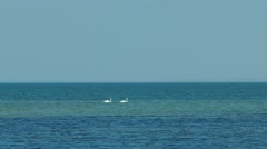 Two swans floating on the sea Stock Footage