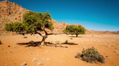 Acacia Tree in a barren desert landscape Stock Footage
