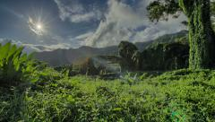 Tropical Rain forest, Banyan Tree Canopy, Jungle, Hawaii, Time Lapse - stock footage