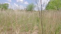Walking handneld over reed field Stock Footage