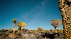 A Quiver Tree forest at night Stock Footage