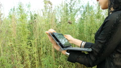 Stock Video Footage of Agronomist with tablet  in Cannabis Marijuana field 03