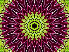 Chrysanthemum natural pattern - stock illustration