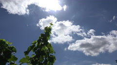 Cumulus clouds time-lapse against bright blue sky Stock Footage