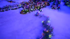 Flowers in Florescent Light Stock Footage