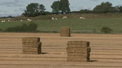 Stock Video Footage of Straw bales in stacks, cattle beyond.