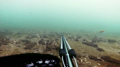 Freediver Spear Fishing and Looking at the the fishes then shoot one Stock Footage