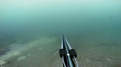 Freediver Spear Fishing and Looking at the the fishes Stock Footage