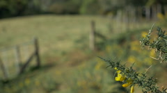Yellow gorse bush and farm gate - stock footage