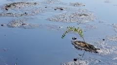 Tree threatened by oil and toxic substances, chemicals and oil Stock Photos
