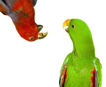 Beautiful red and green macaw parrots Stock Photos