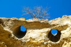 Stock Photo of A tree on the sandstone rocks.