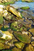 Coast with stones with green marine algae. Stock Photos