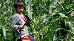 Boy gathering corn hays feedstock - stock footage