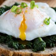 Spinach and poached egg on brown bread Stock Photos