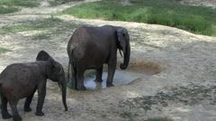 Forest Elephant having a shower in bai in Central African Republic 2 Stock Footage