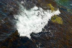 A big wave and the brown algae. - stock photo