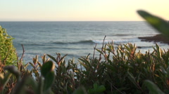 beach waves rolling in with shrubs in the foreground - stock footage