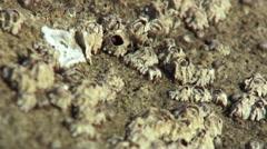 Beach ECU of barnacles on rock Stock Footage