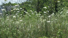 Close up overgrown field. Stock Footage