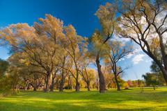 Autumnal trees landscape Stock Photos